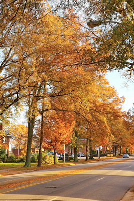 Tree lines street in Rock Hill, SC on November 15, 2012 with fall colors and leaves hanging on.