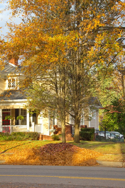Leaf pile on road and trees with leaves hanging on still, November 15, 2012, Rock Hill, SC